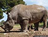 CyberDodo et les Rhinocéros (1-28)
