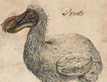 Dodo – Dossier CyberDodo  (1-2)