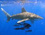 Le quiz des Requins (1-27)