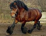 Le quiz des chevaux de trait (1-36)