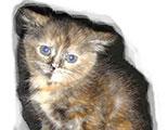 Le quiz des animaux abandonnés (1-43)