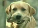 Humour animal...