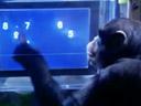 Le chimpanzé a meilleure mémoire que l'homme