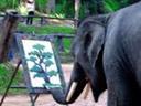 L'éléphant Picasso..