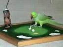 Un oiseau intelligent