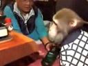 Le singe serveur